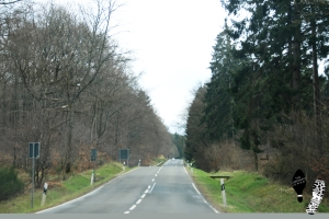 eifel_nationalpark_road